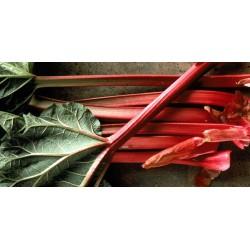 Red Rhubarb Seeds
