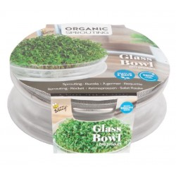 Sprouts Growing Kit Bowl
