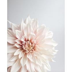 Edible Dry Dahlia Flower
