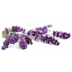 Natural Flavors Lavender 50 ML